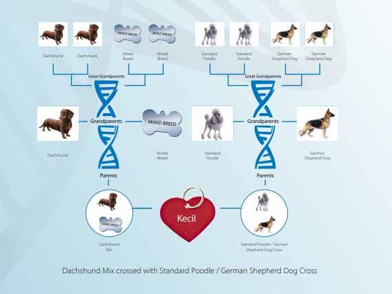 DNA_Kecil