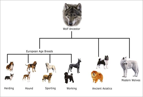 Dogs_history_tree