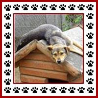 Hondenhok1
