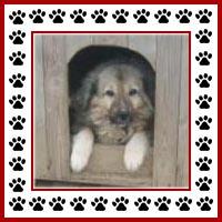 Hondenhok10