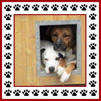 Hondenhok11