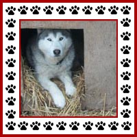 Hondenhok2