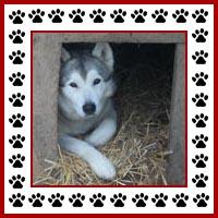 Hondenhok3