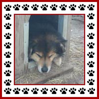 Hondenhok4