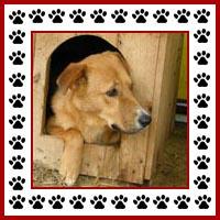 Hondenhok7