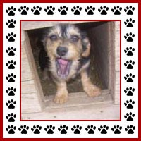 Hondenhok9